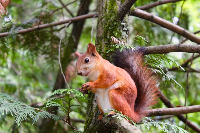 Can squirrels carry rabies?